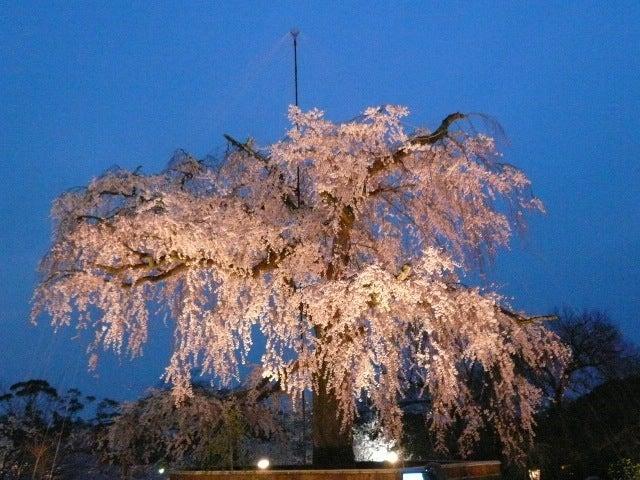 [ライトアップ]円山公園